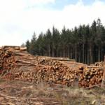 Svantaggi Serramenti in legno - Infissi Padova